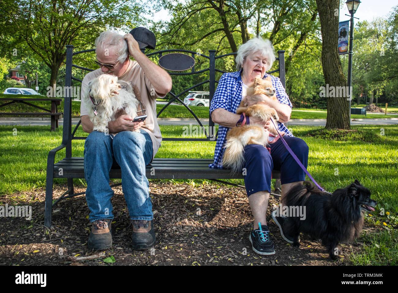 Una coppia senior con tre piccoli (ancora molto yappy) cani. Immagini Stock