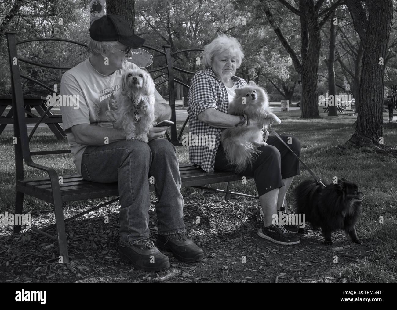 Una coppia senior con tre piccoli (ancora molto yappy) cani. Monocromatico. Immagini Stock