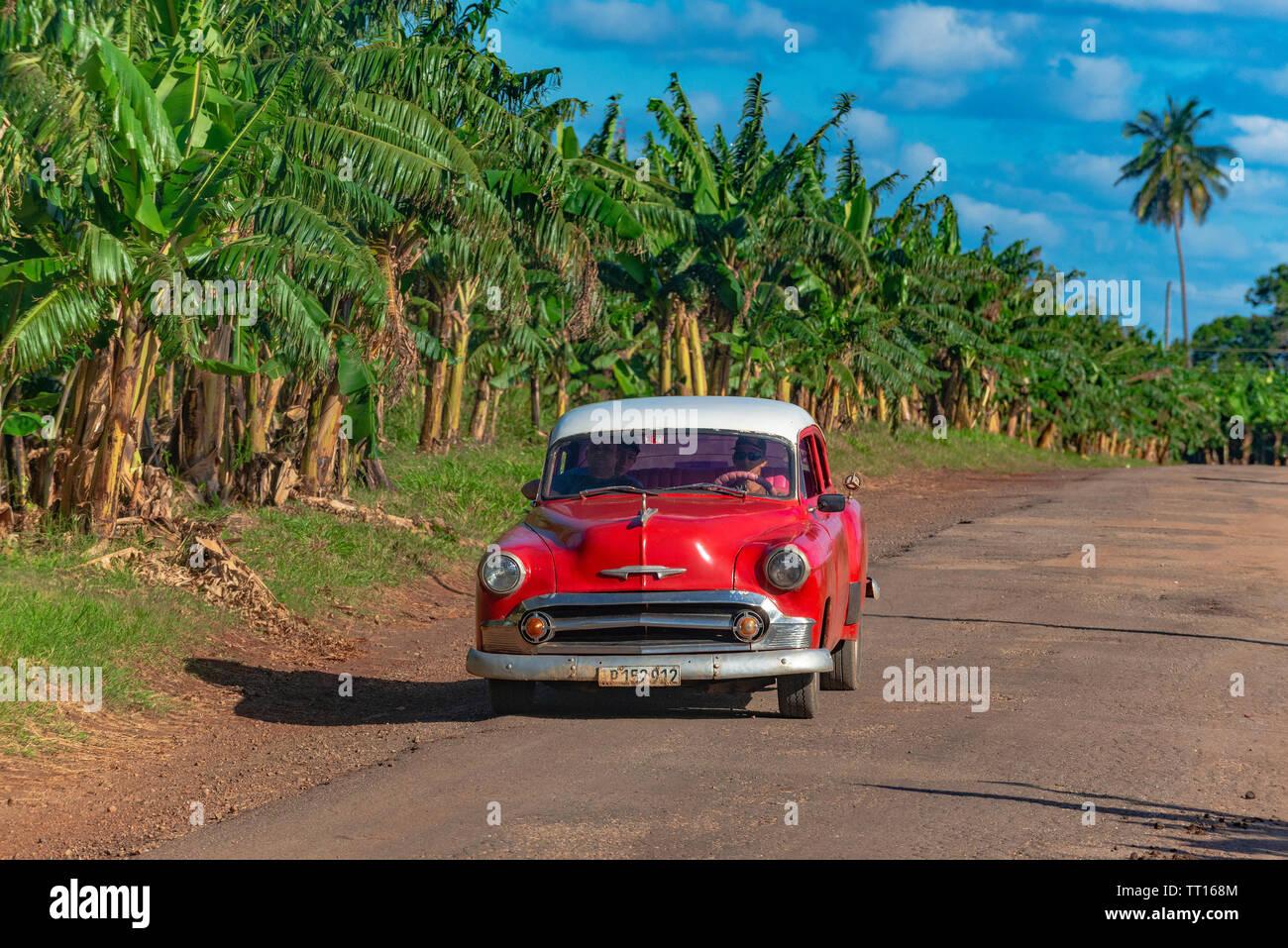 Auto cubana classica che passa davanti ad una piantagione di banane sulla strada da Vinales a Palma Rubia (Cayo Levisa) Pinar del Rio Provincia, Cuba Foto Stock
