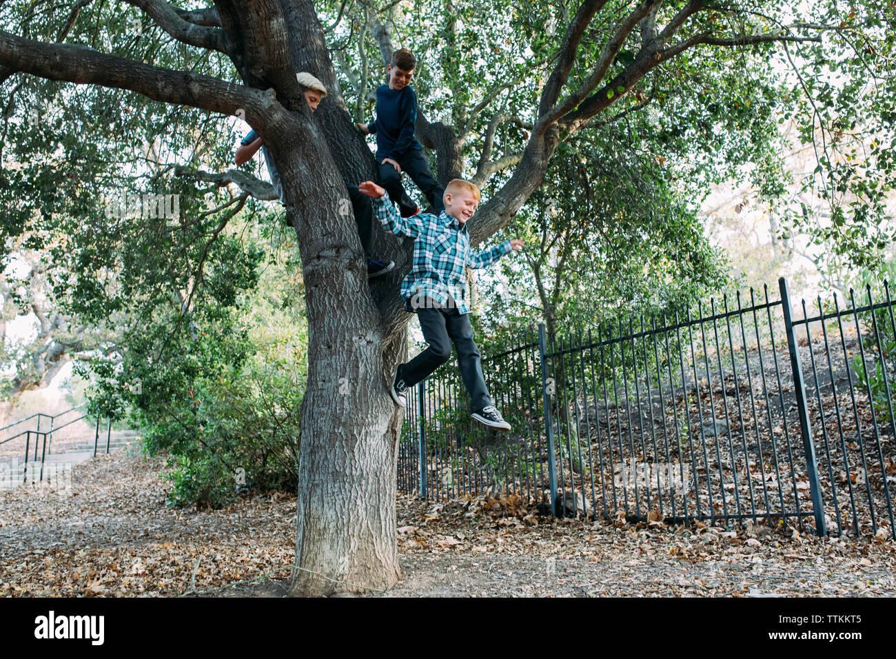 Fratelli guardando il ragazzo che salta da albero a park Foto Stock