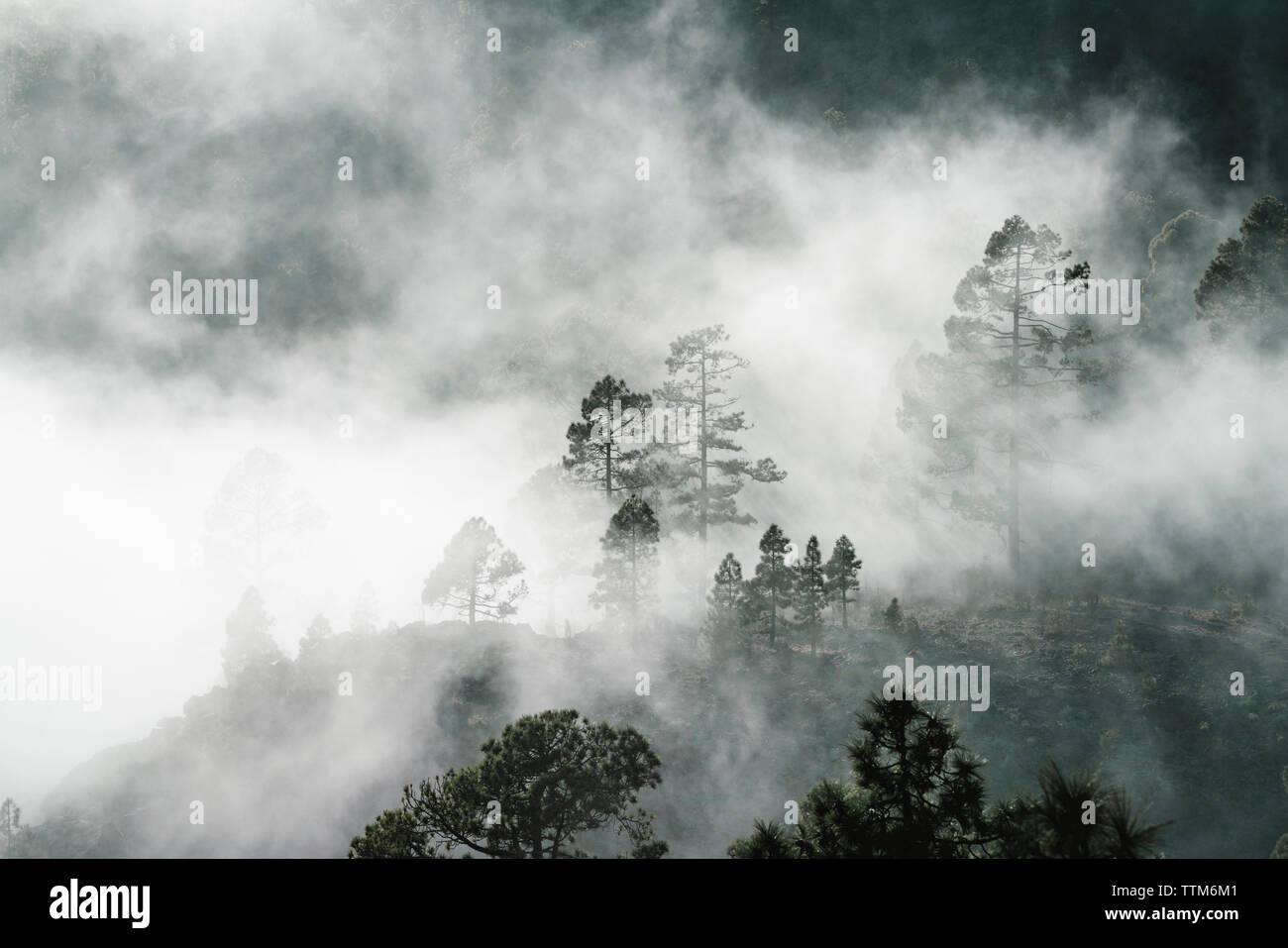 Gli alberi nelle foreste durante la nebbia meteo Foto Stock