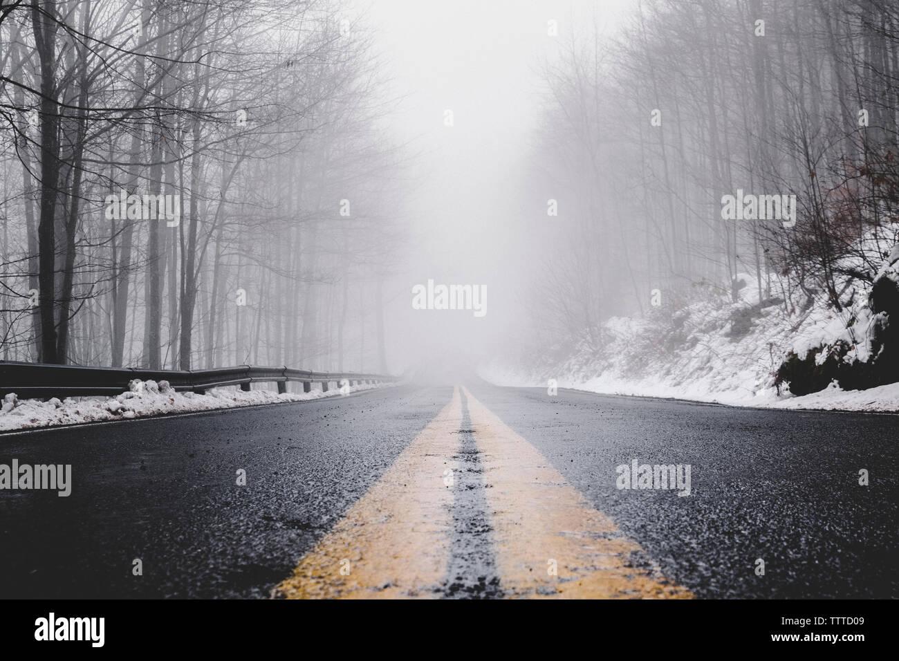 Vuoto paese bagnato strada in mezzo a nudo alberi durante la nebbia meteo Foto Stock