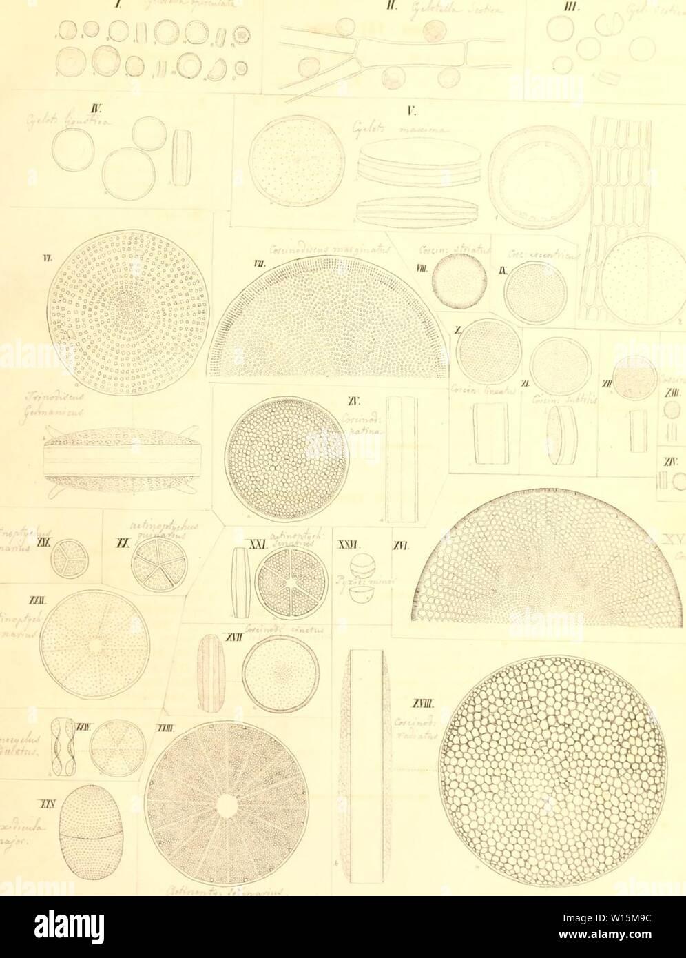 Immagine di archivio da pagina 164 di morire kieselschaligen Bacillarien oder Diatomeen. Die kieselschaligen Bacillarien oder Diatomeen . diekieselschalig00ktzi Anno: 1844 / : Foto Stock
