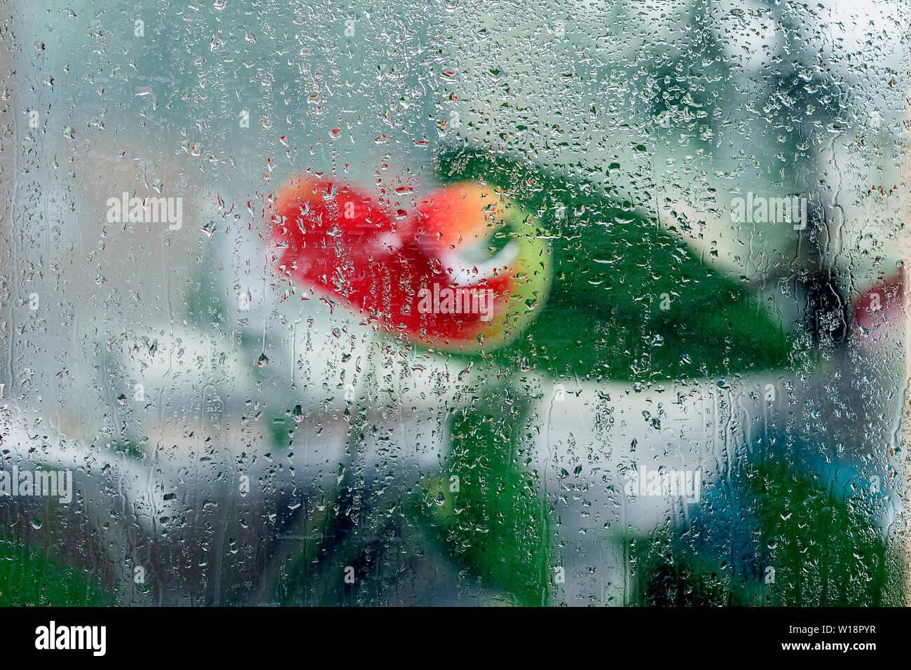 Impressionismo naturale, arte colori della natura. Sfocato fiori rossi, wet vetro, gocce di pioggia. Sfondo astratto Immagini Stock