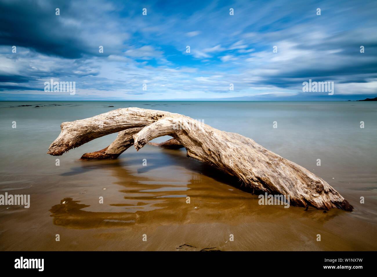 Un albero morto sulla spiaggia, Kaka punto il Catlins, Isola del Sud, Nuova Zelanda Foto Stock