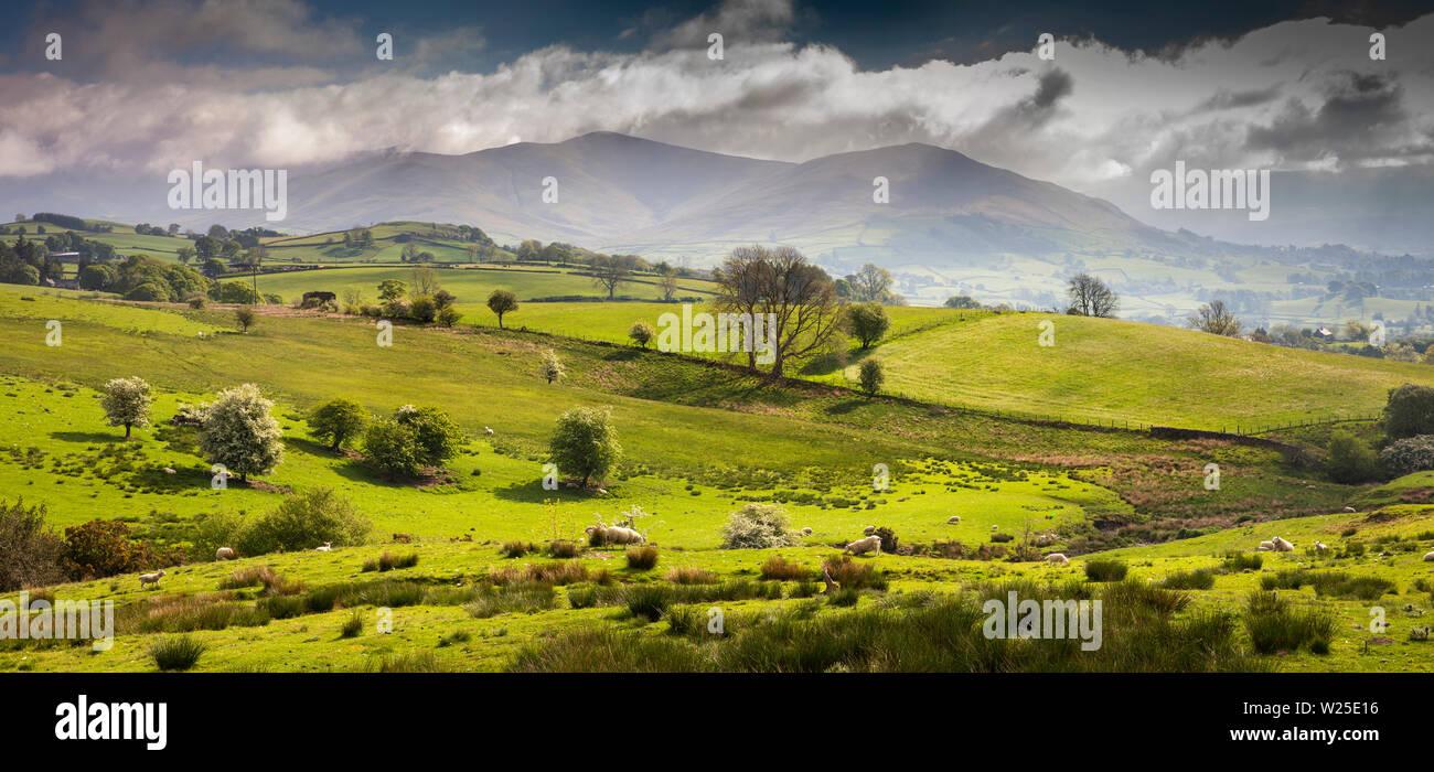 Regno Unito, Cumbria, York, vista panoramica di ovini fissando lo sguardo sui terreni agricoli e Howgill Fells da Owshaw Immagini Stock