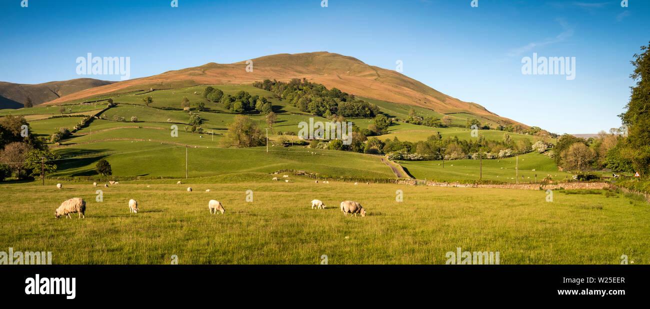 Regno Unito, Cumbria, York, Marthwaite, pecore al pascolo su terreni agricoli nella valle sottostante e avvolgitore Howgill Fells, panoramica Immagini Stock