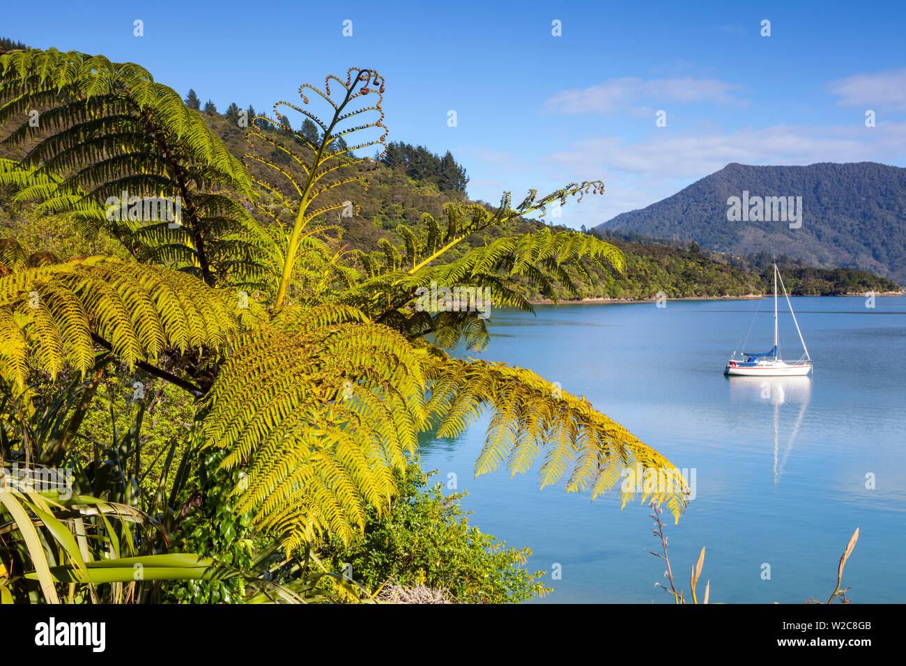 Yacht ancorati nella pittoresca Kenepuru Sound, Marlborough Sounds, Isola del Sud, Nuova Zelanda Immagini Stock