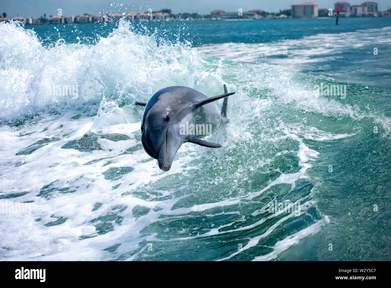 Dolphin Surf le onde Immagini Stock