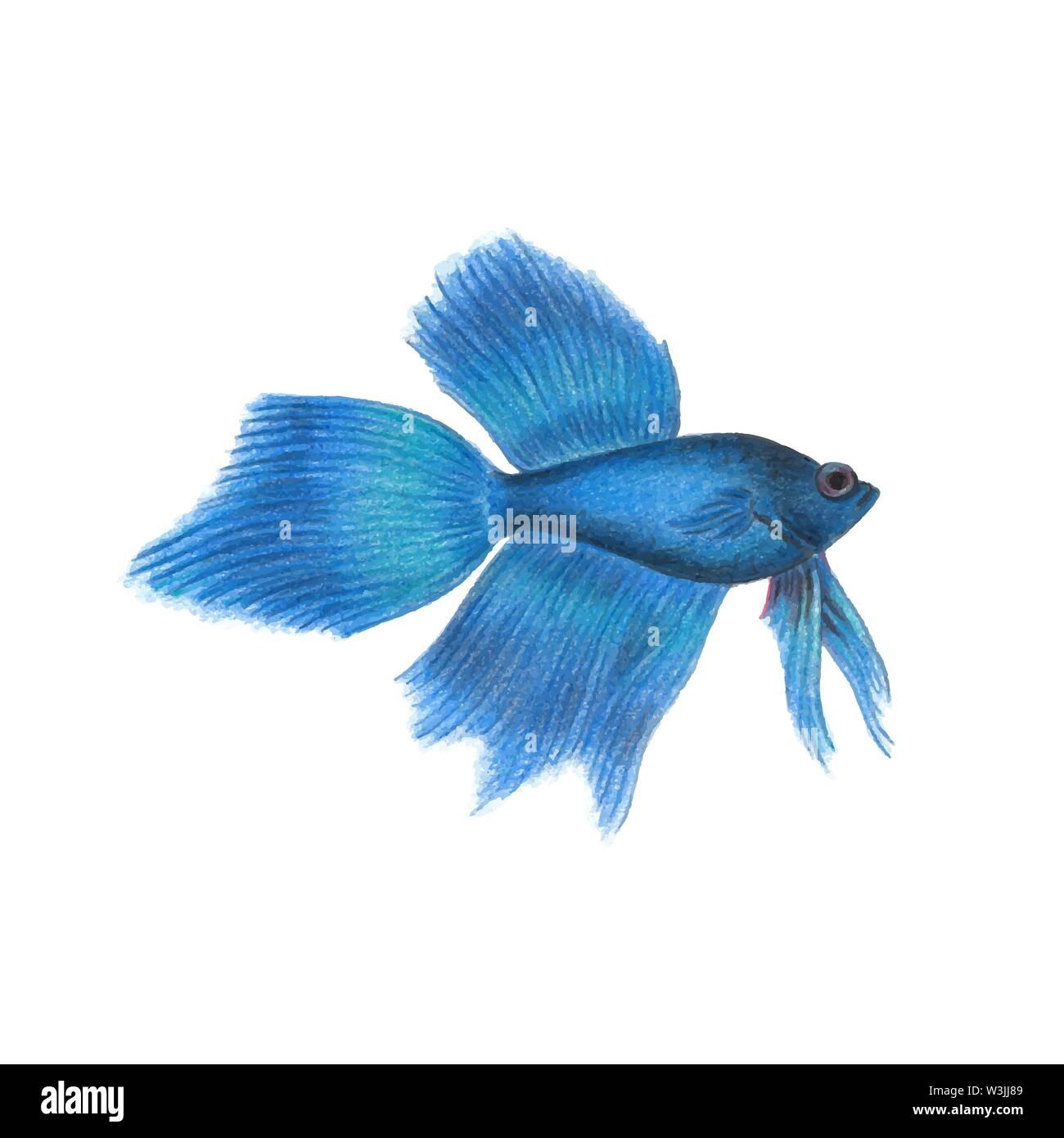 Illustrazione Di Pesce Immagini Illustrazione Di Pesce Fotos