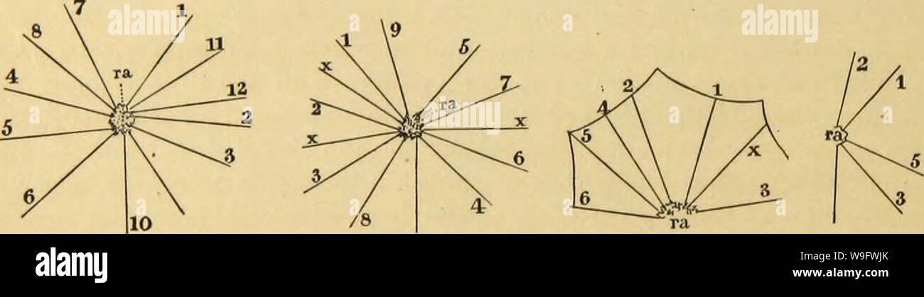 Archivio immagine dalla pagina 75 della American ragni e loro la filatura. Ragni americani e il loro lavoro di filatura. Una storia naturale dell'orbweaving ragni degli Stati Uniti, con particolare riguardo alla loro industria e abitudini CUbiodiversity1121211-9742 Anno: 1889 ( 76 AMERICAN ragni e loro SriNNIN(JWORK. passata giù 1 e lungo D a 3, in cui l'attacco è stato effettuato e il raggio 3 è stata formata. Ancora una volta il centro è stato cercato, e passando lungo la linea A del punto 4 è stato raggiunto e un altro raggio non allacciata. In tal modo da 4 a 5, da 5 a 6, e così intorno tlie intero cerchio. La mechan- ical Foto Stock