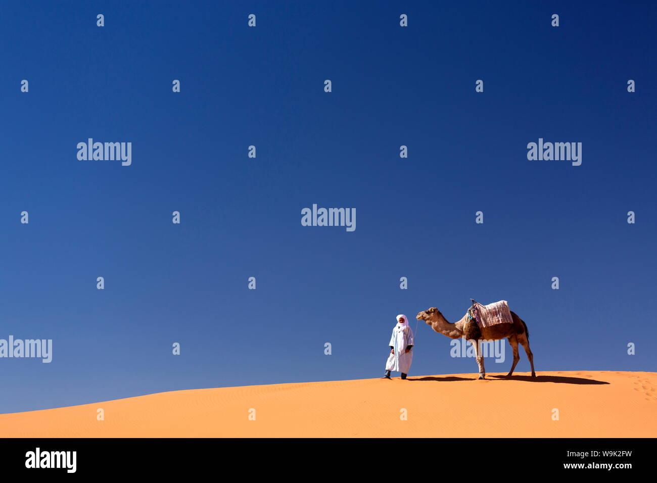 Berber l uomo con il cammello sul crinale di un arancione dune di sabbia di Erg Chebbi mare di sabbia, Sahara Deserto vicino a Merzouga, Marocco, Africa Settentrionale, Africa Foto Stock
