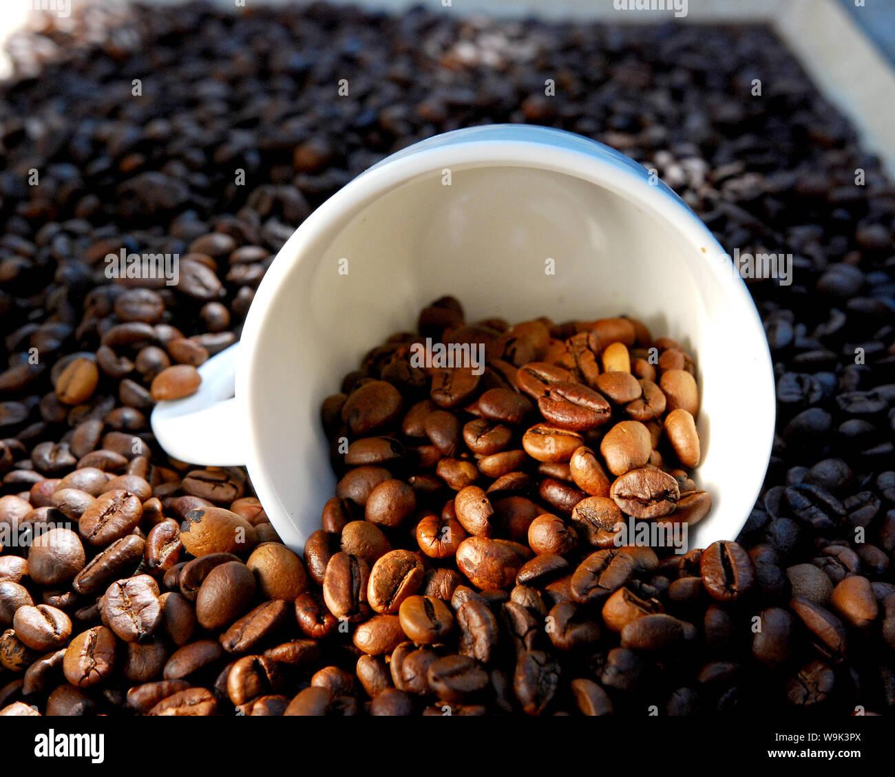 Chicchi di caffè tostati immagine di un Foto Stock