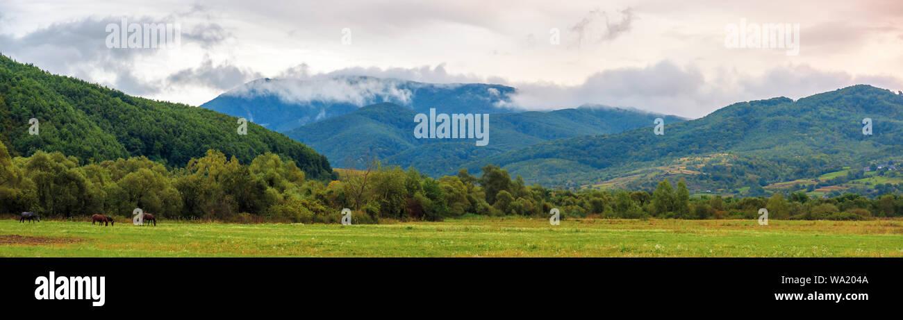 Panorama rurale in montagna all'alba. campi agricoli a inizio autunno. nuvoloso pioggia. tradizionale campagna dei Carpazi Foto Stock
