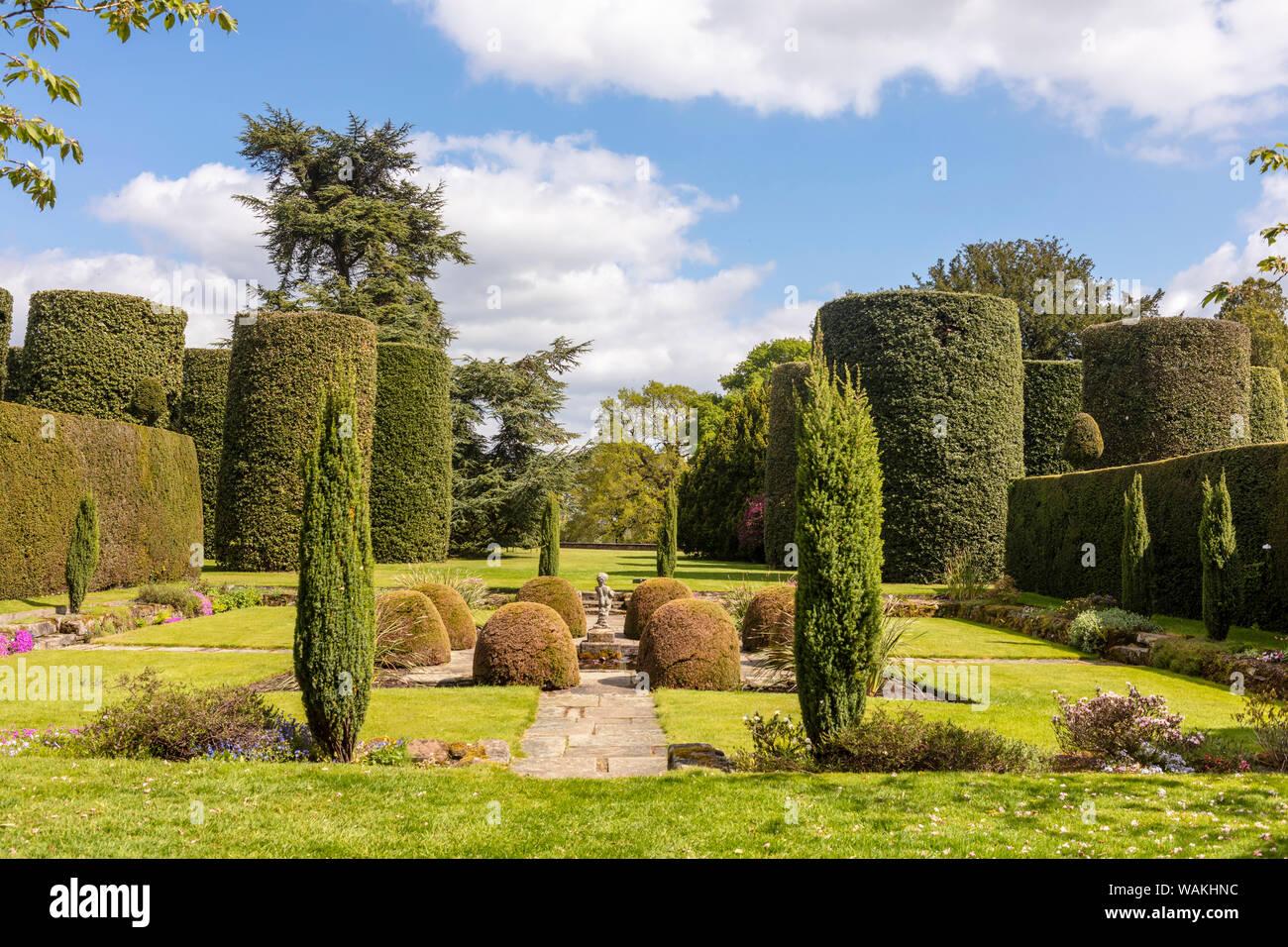Alberi Ornamentali Da Giardino piccoli alberi da giardino immagini & piccoli alberi da