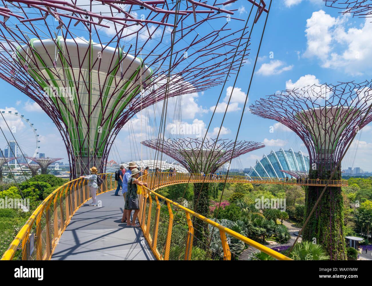 La OCBC Skyway, una passerella aerea nel Supertree Grove, giardini dalla baia, città di Singapore, Singapore Foto Stock