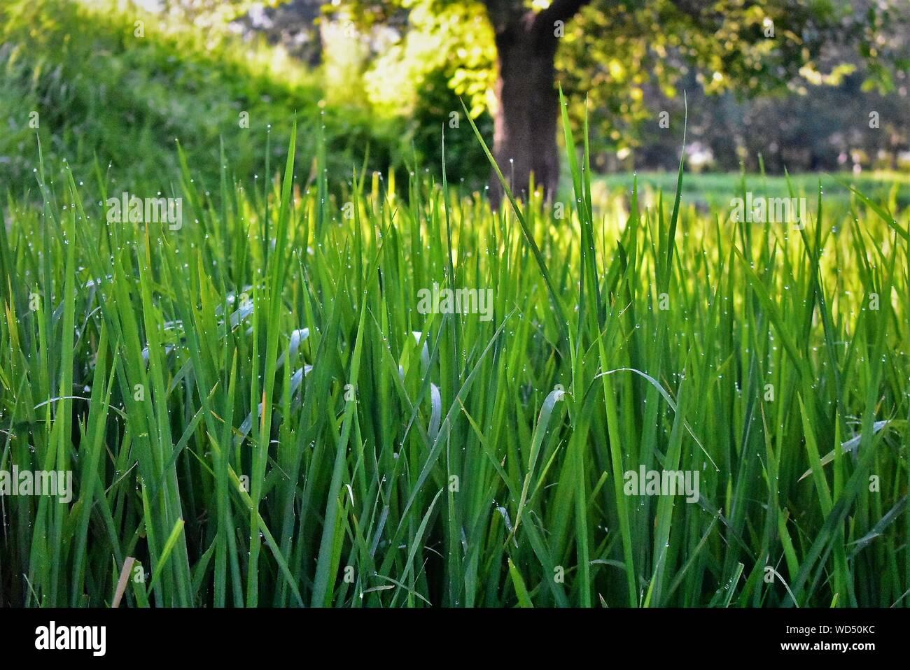 Piante, Giardini e verde Foto Stock