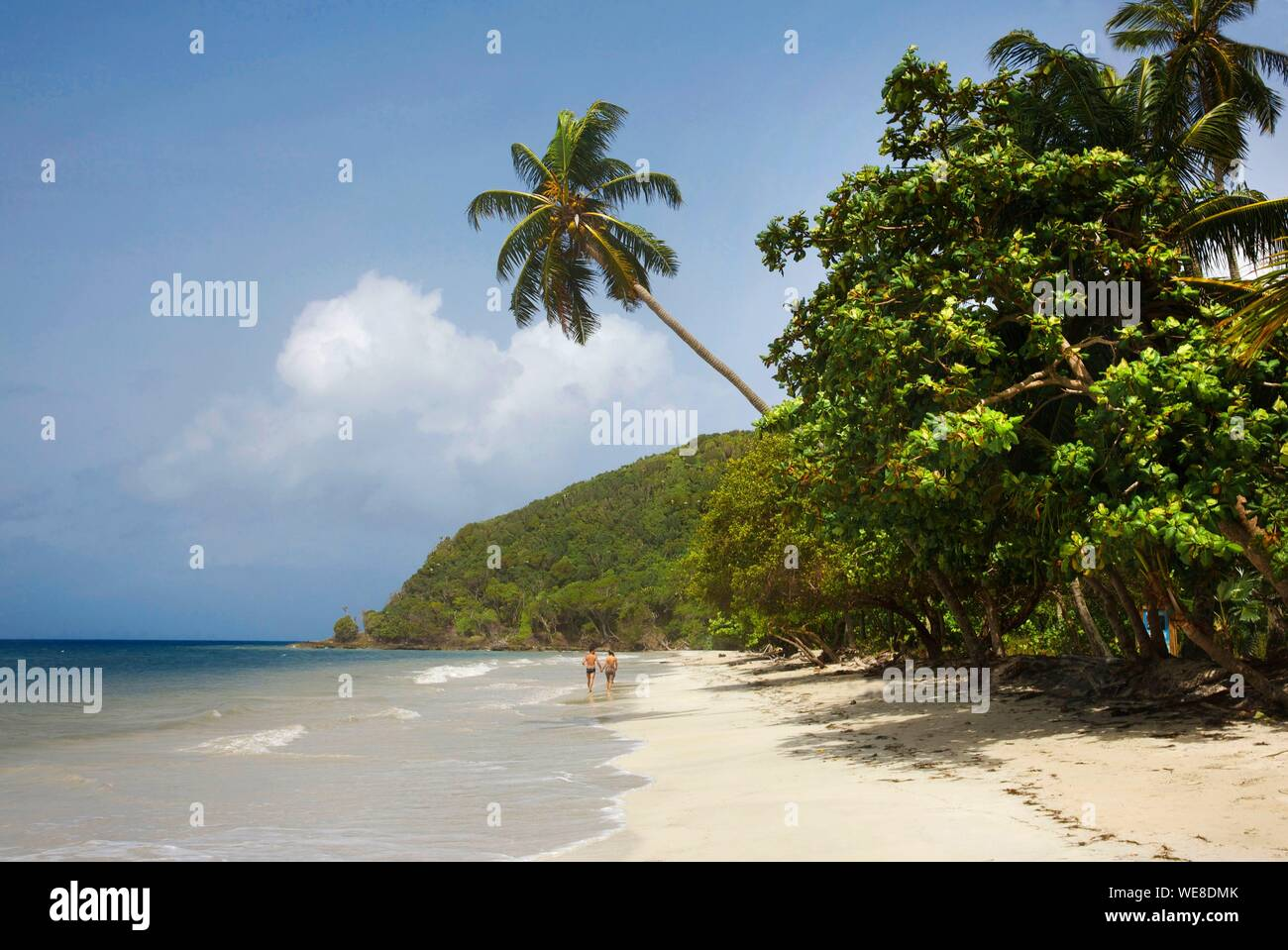La Colombia, isola di Providencia, giovane di camminare sulla spiaggia di Manzanillo fiancheggiate da alte palme da cocco e bagnata dal Mar dei Caraibi Foto Stock