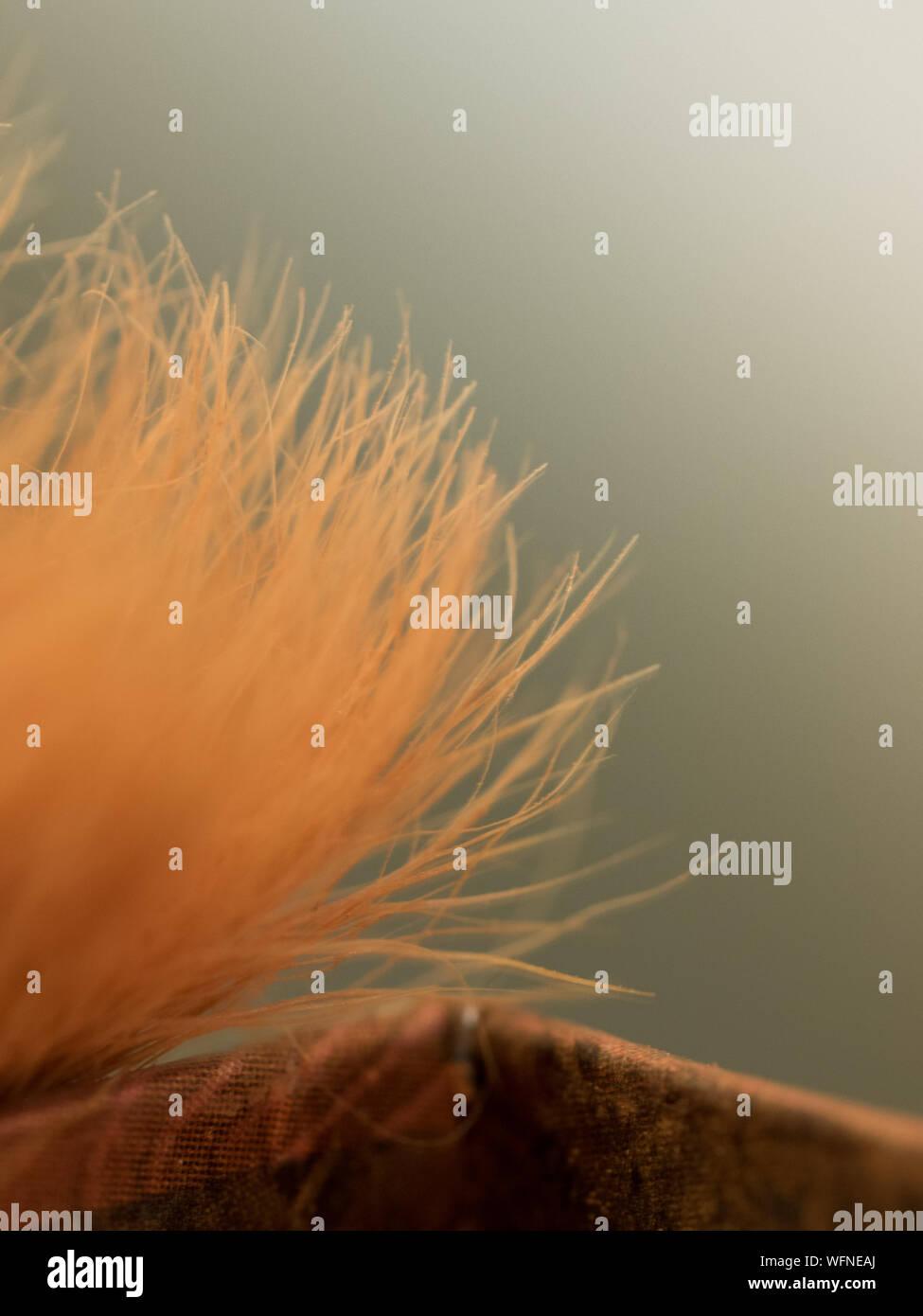Extreme Close-up della spazzola Foto Stock