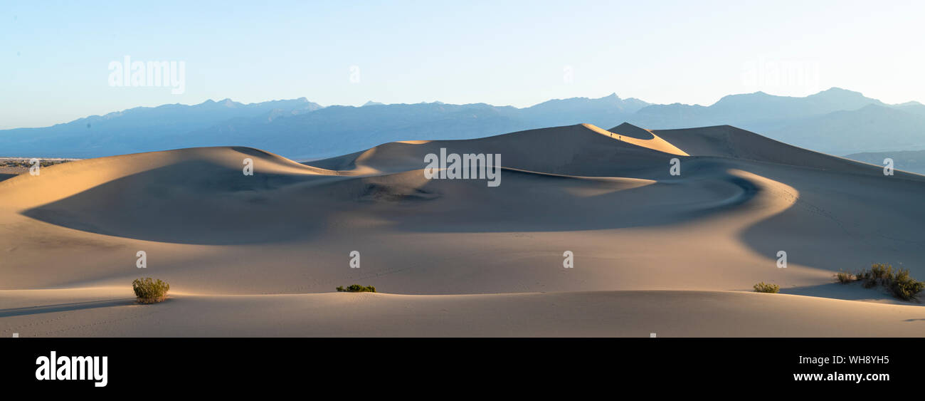 Mesquite flat dune di sabbia nel Parco Nazionale della Valle della Morte, California, Stati Uniti d'America, America del Nord Foto Stock
