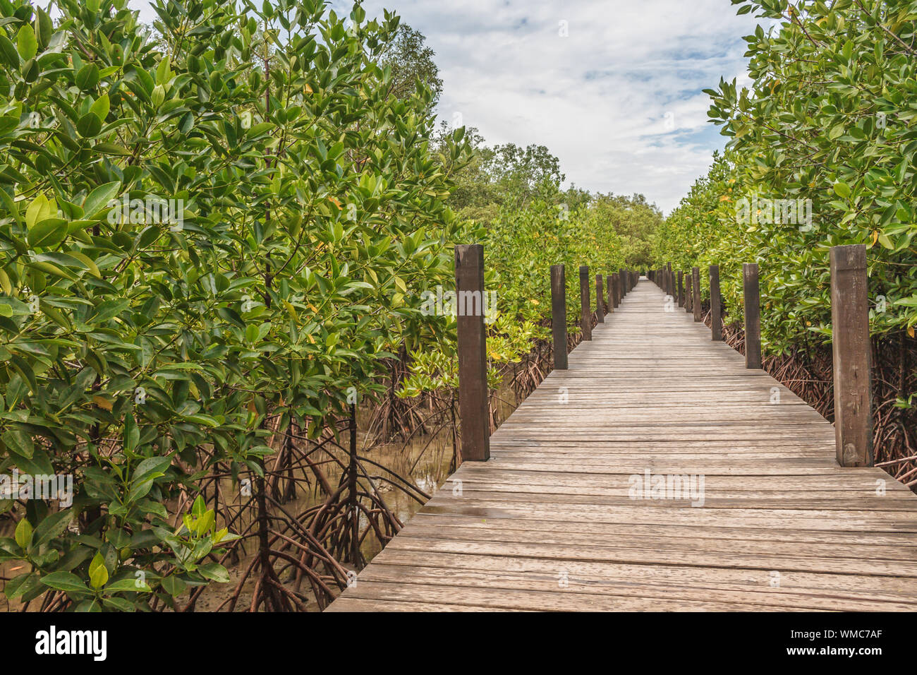 Il Boardwalk tra alberi di mangrovia contro Sky Foto Stock