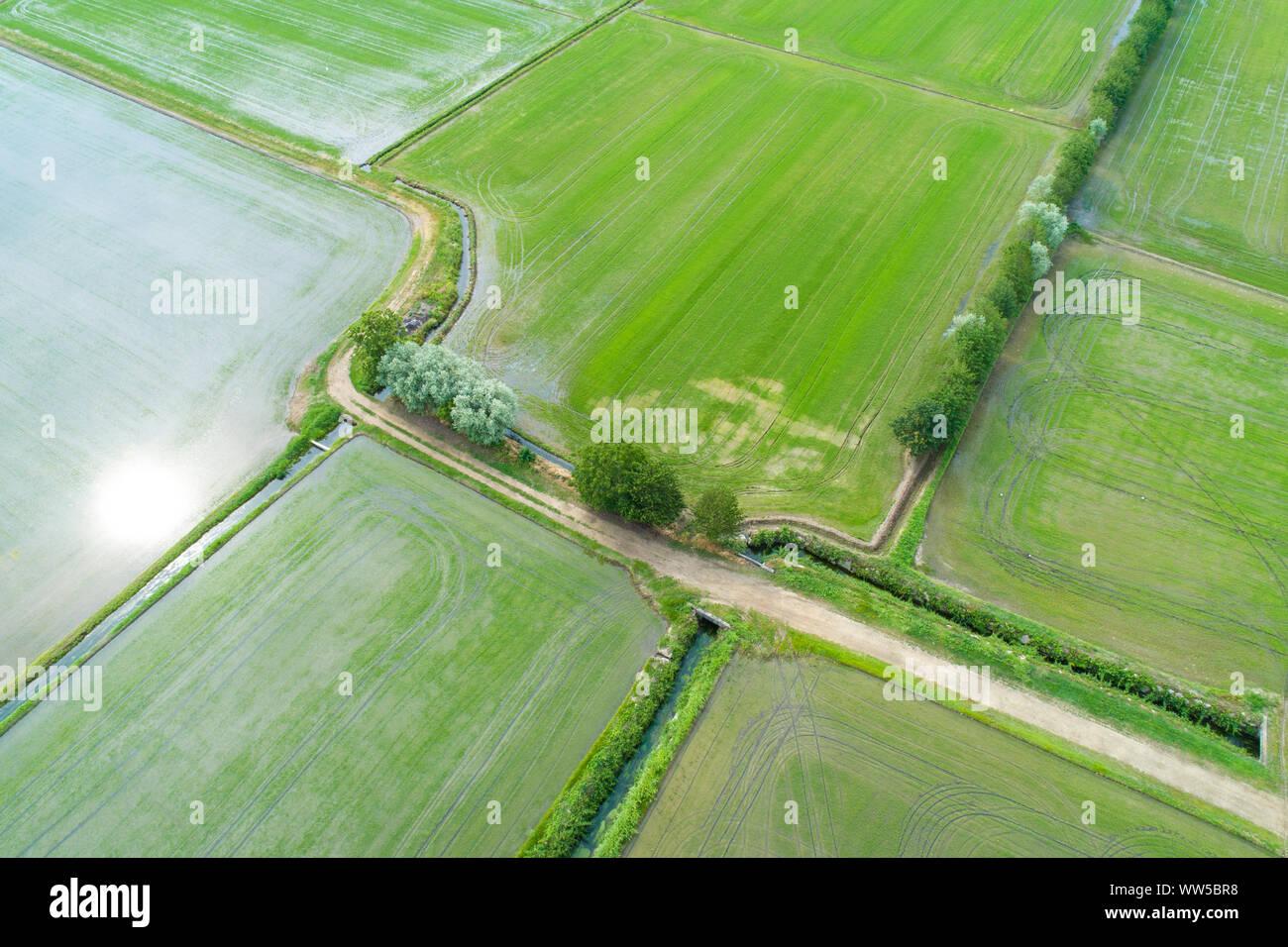 Campi allagati per la coltivazione del riso visto dal di sopra, panorama della valle Padana, Piemonte, Italia Foto Stock