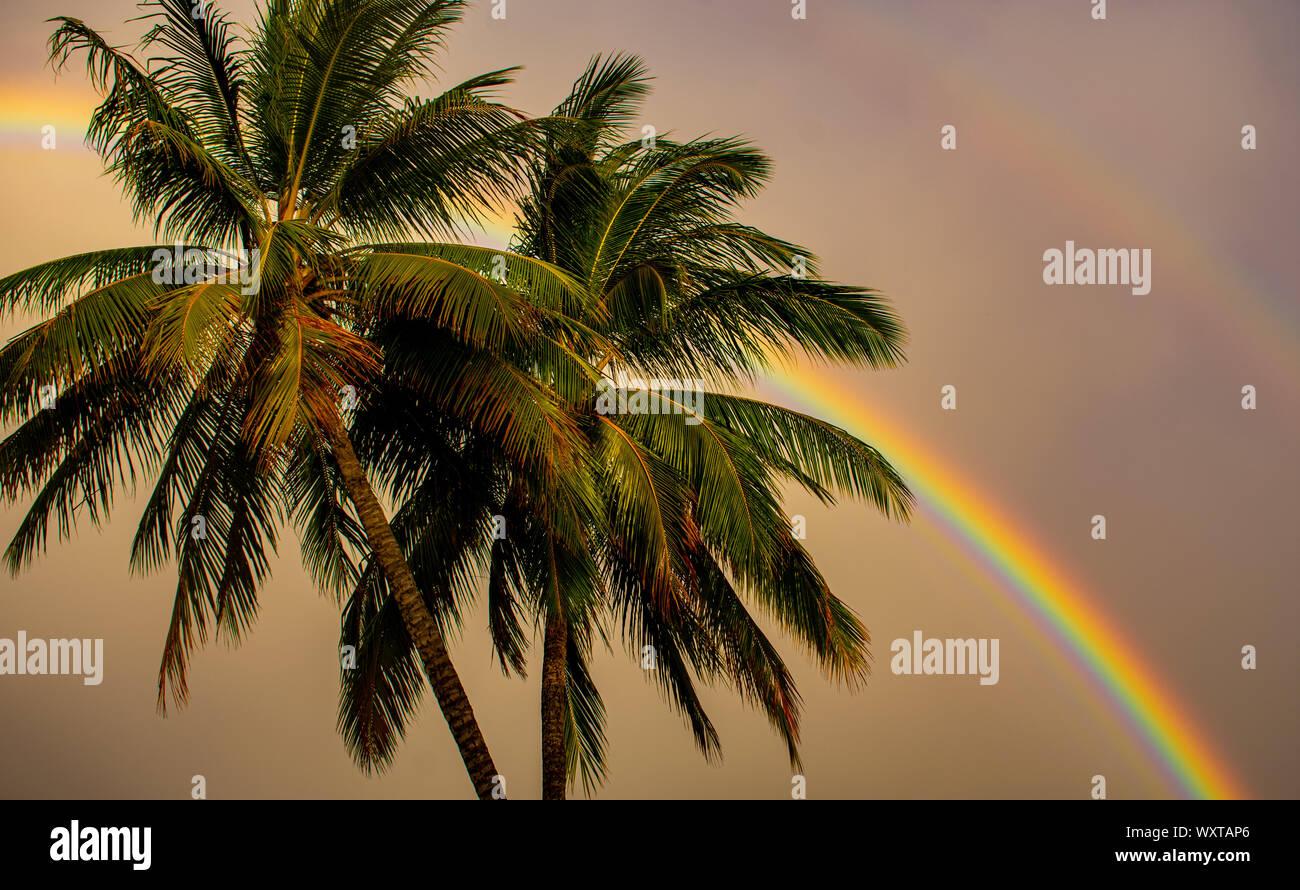 Rainbow attraverso i palmi dopo una tempesta di attualità in Cairns Australia. Foto Stock