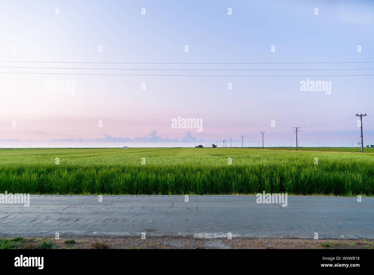Tranquillo e scena minimalista delle risaie nelle prime ore del mattino all'alba con il caldo e la luce viola e poche nuvole in cielo nel Delta del Ebro park Foto Stock