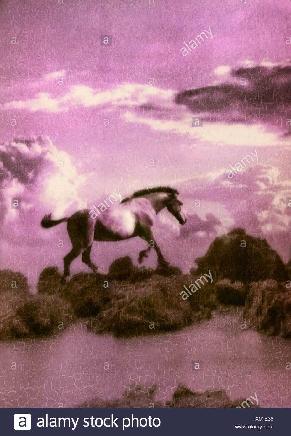horse2 Immagini Stock