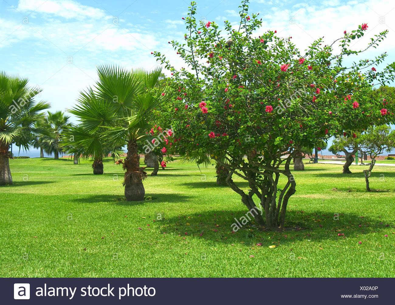 Immagini Di Piante E Alberi parco di alberi di piante e fiori di ibisco foglia perù tree