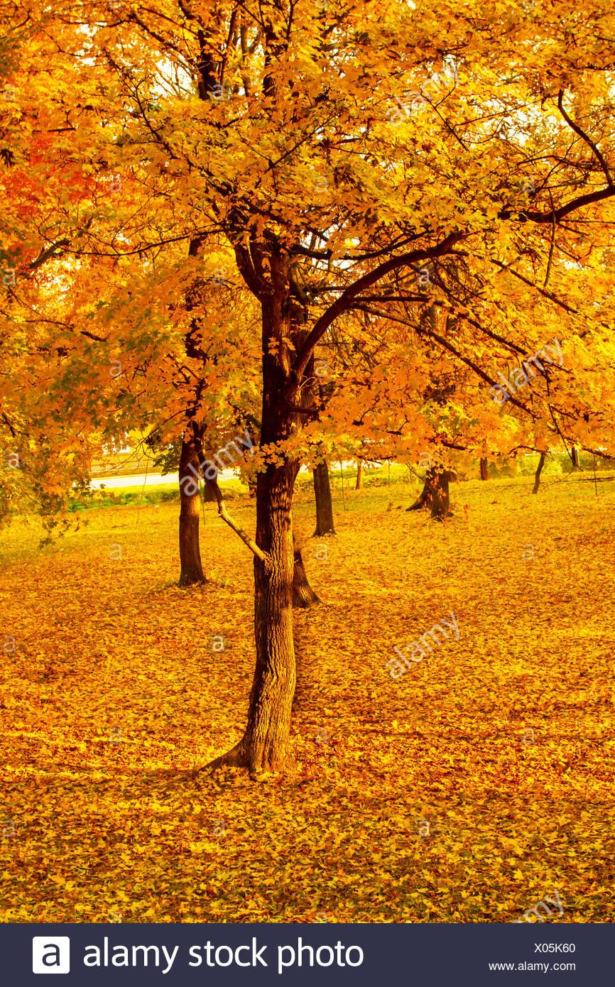 Paesaggi di autunno Immagini Stock