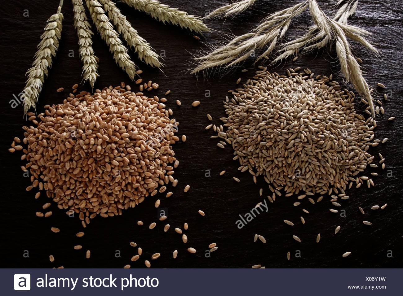 La segala (Secale cereale) e frumento (Triticum) su un ardesia Immagini Stock