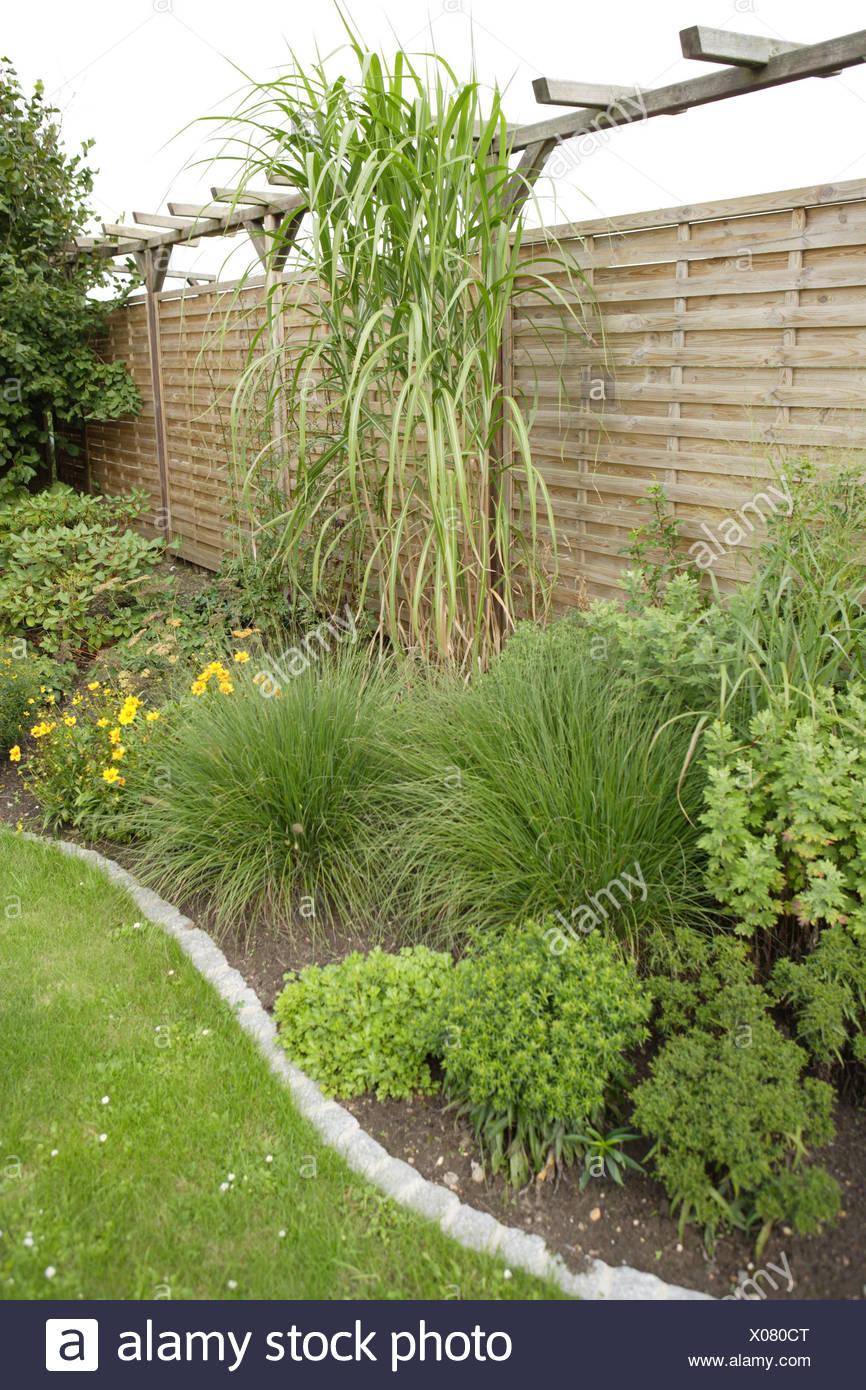 Piante Per Recinzioni Giardino.Giardino Recinzione Di Legno Piante Verdi Patch Recinzione Di