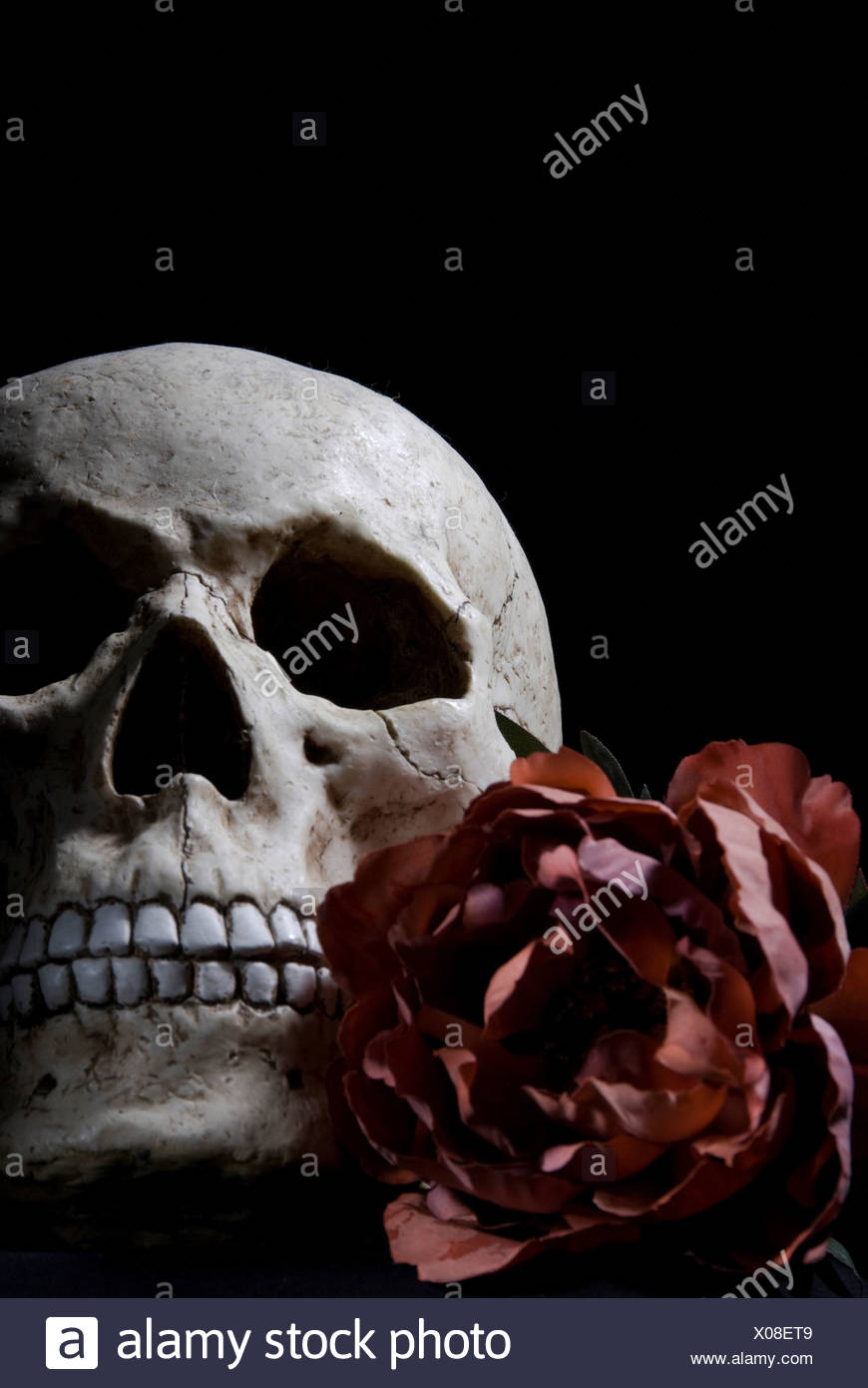 Teschio E Rose Foto Immagine Stock 275553161 Alamy