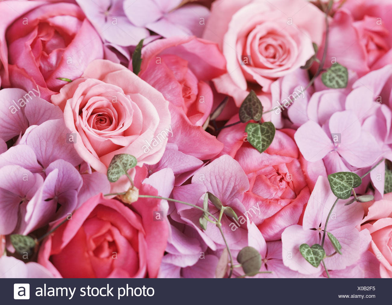 Rose e ortensie Immagini Stock