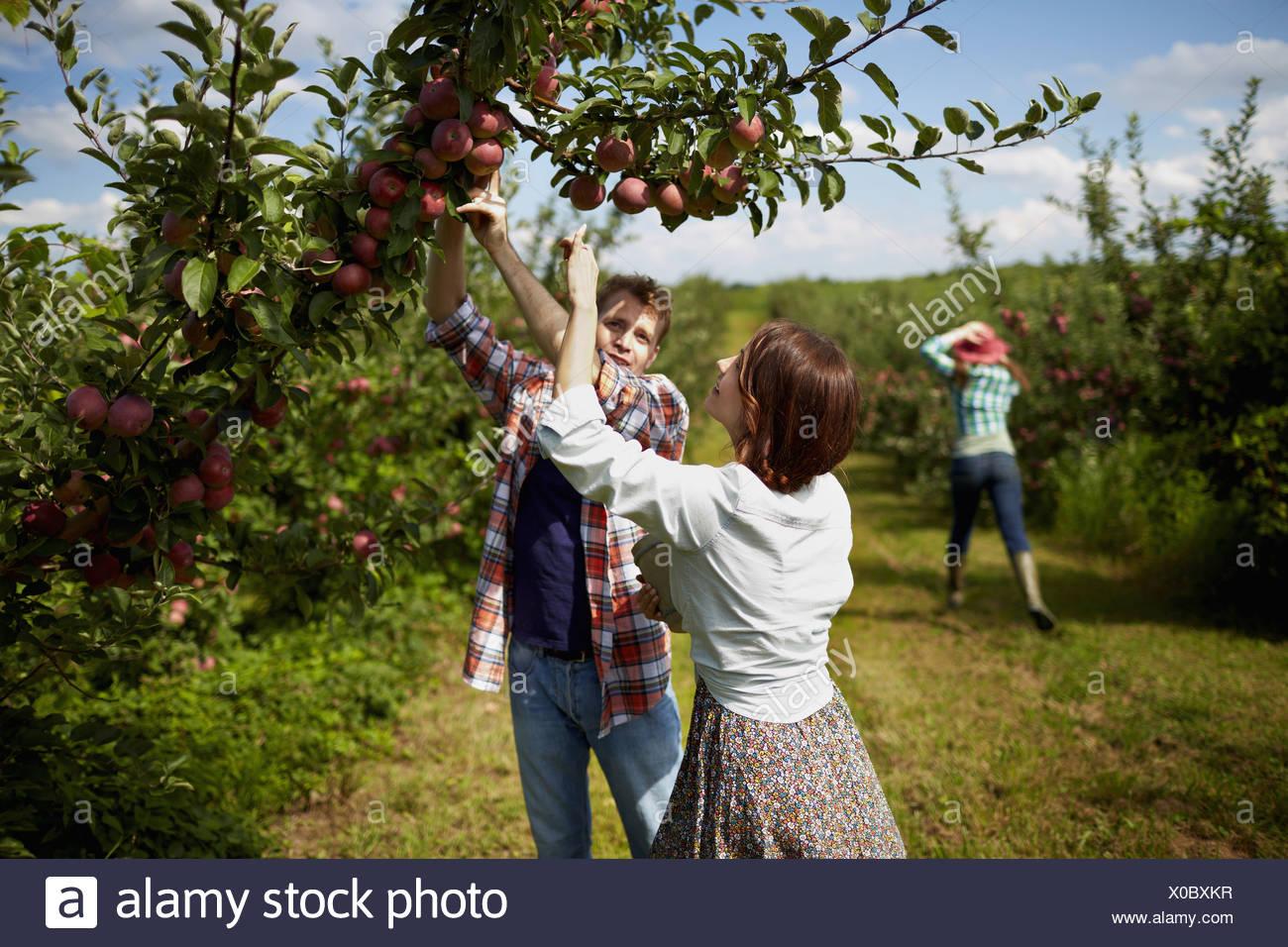 Foto Di Alberi Da Frutto filari di alberi da frutto in un frutteto organico di un