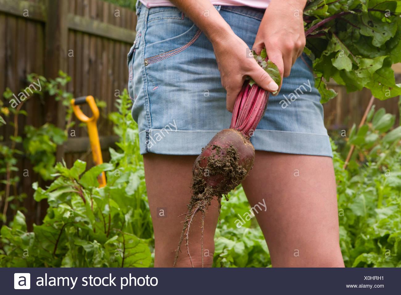 Donna raccolta barbabietole fresche da giardino Immagini Stock