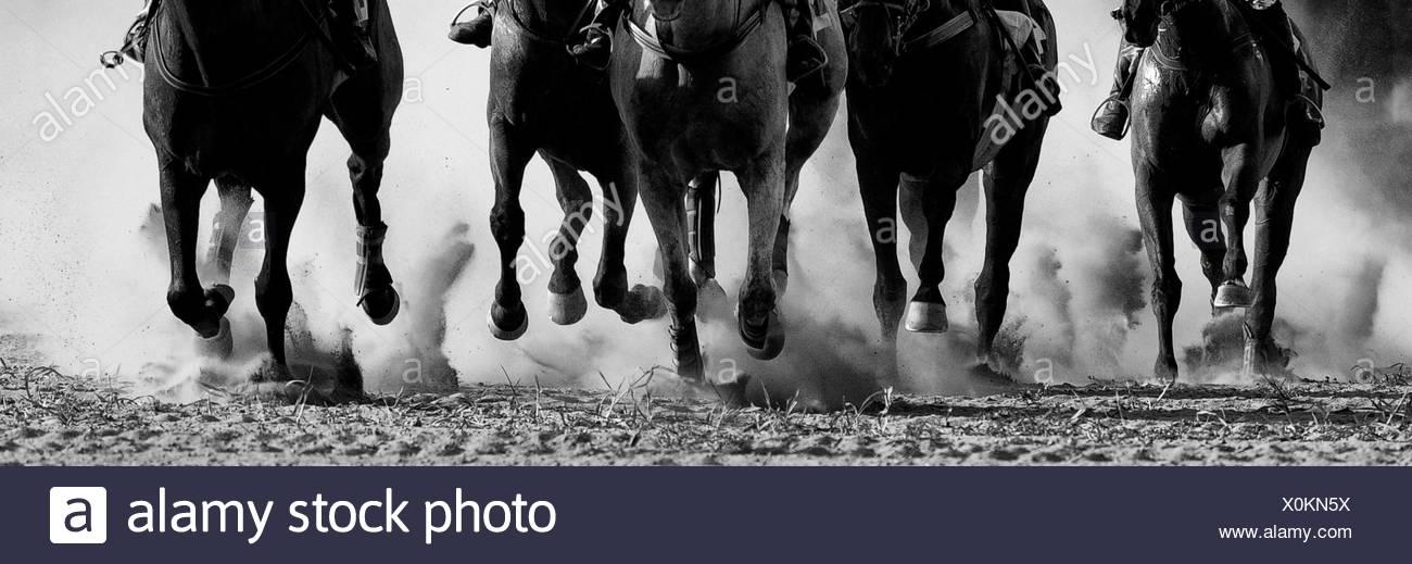 Le corse di cavalli in Pardubice Immagini Stock
