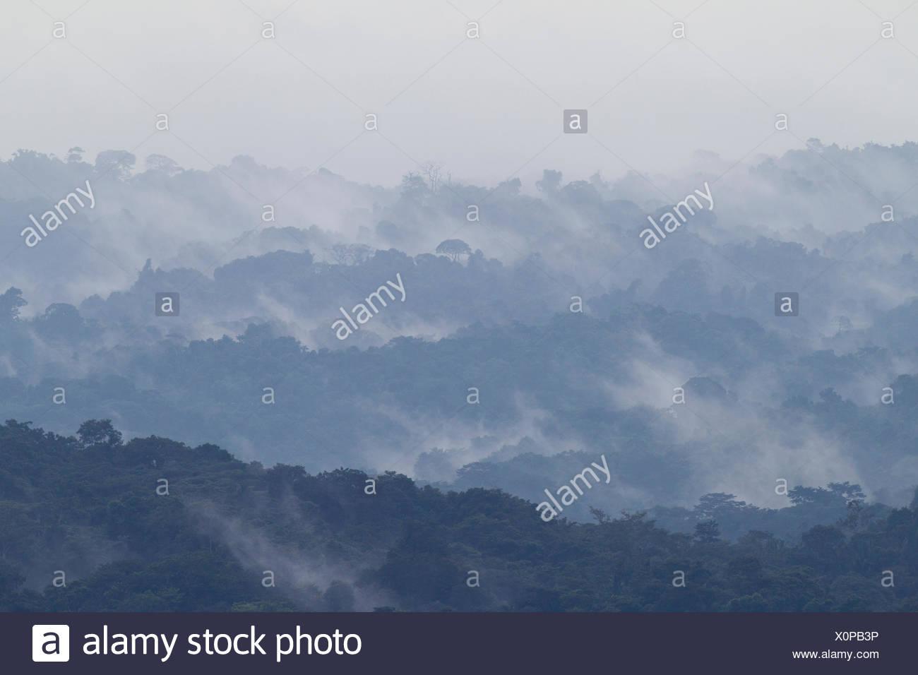 La foresta pluviale tropicale paesaggio con nebbia, Barro Colorado Island, il Lago di Gatun, sul Canale di Panama, Panama. Foto Stock