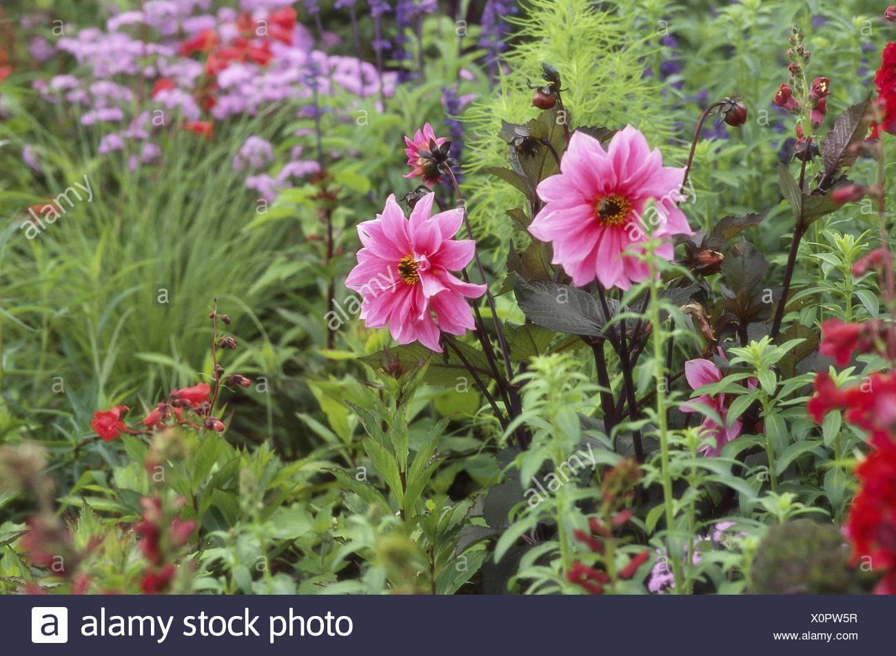 Fiori da giardino estivi giardino letto di fiori fiori diversamente blumi letto magnifici - Fiori estivi da giardino ...