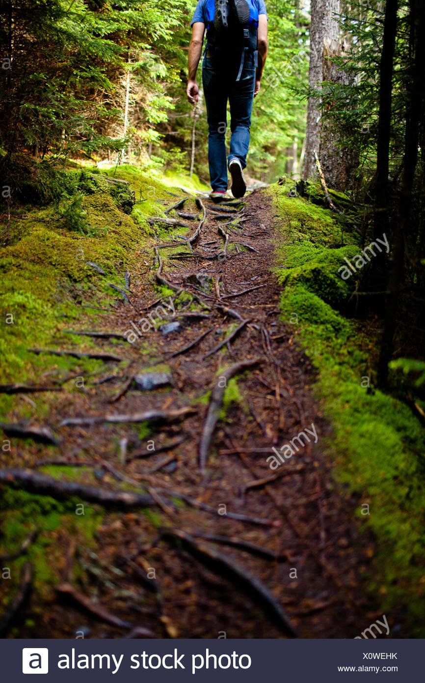 Vista posteriore dell'uomo trekking nella foresta, Maine, America, STATI UNITI D'AMERICA Immagini Stock