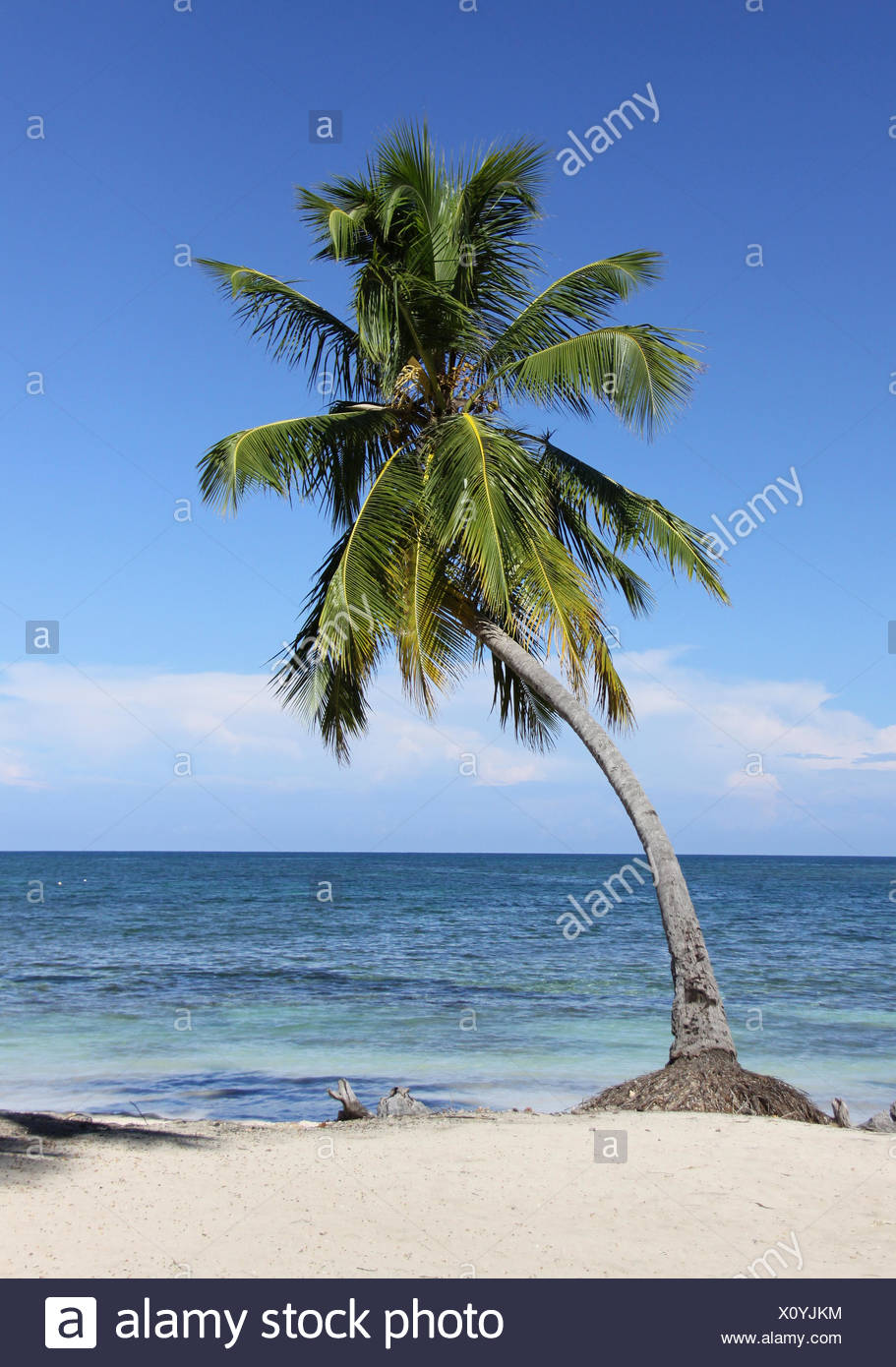 Lonely Palm tree Immagini Stock