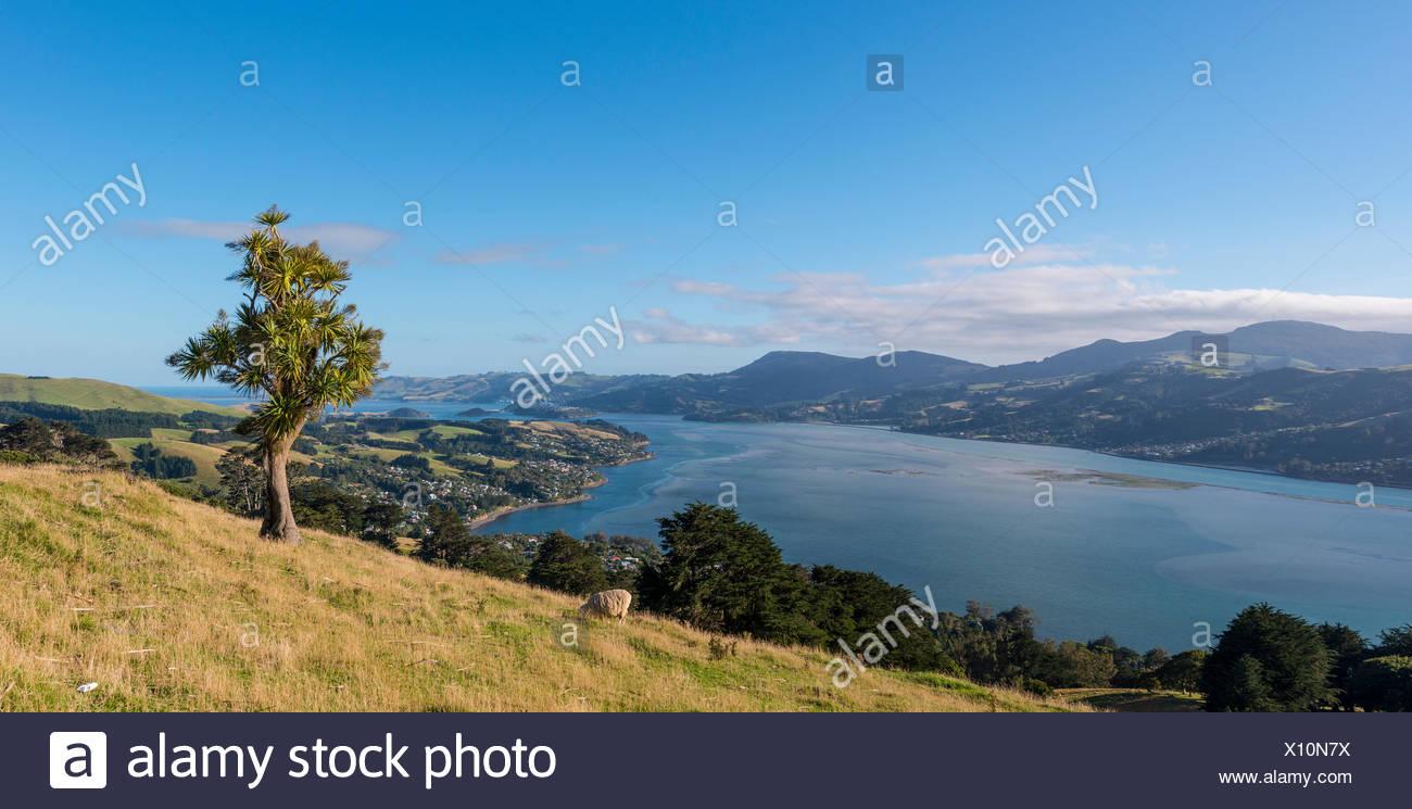 Il paesaggio costiero, porto di Otago, Otago, Isola del Sud, Nuova Zelanda Foto Stock