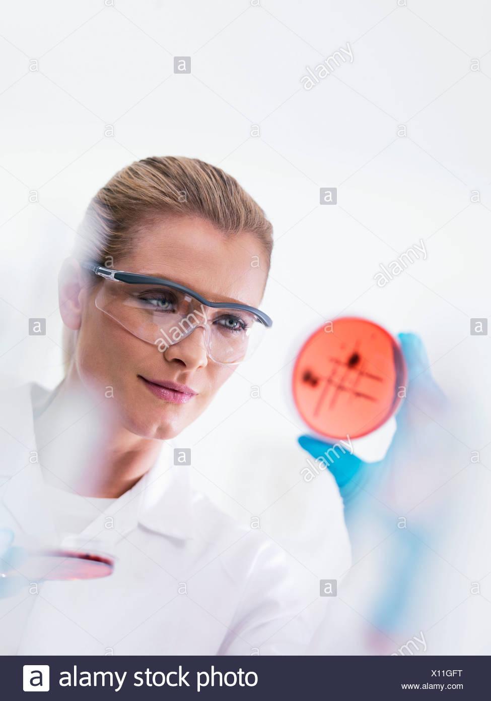 Microbiologo esaminando le culture Immagini Stock