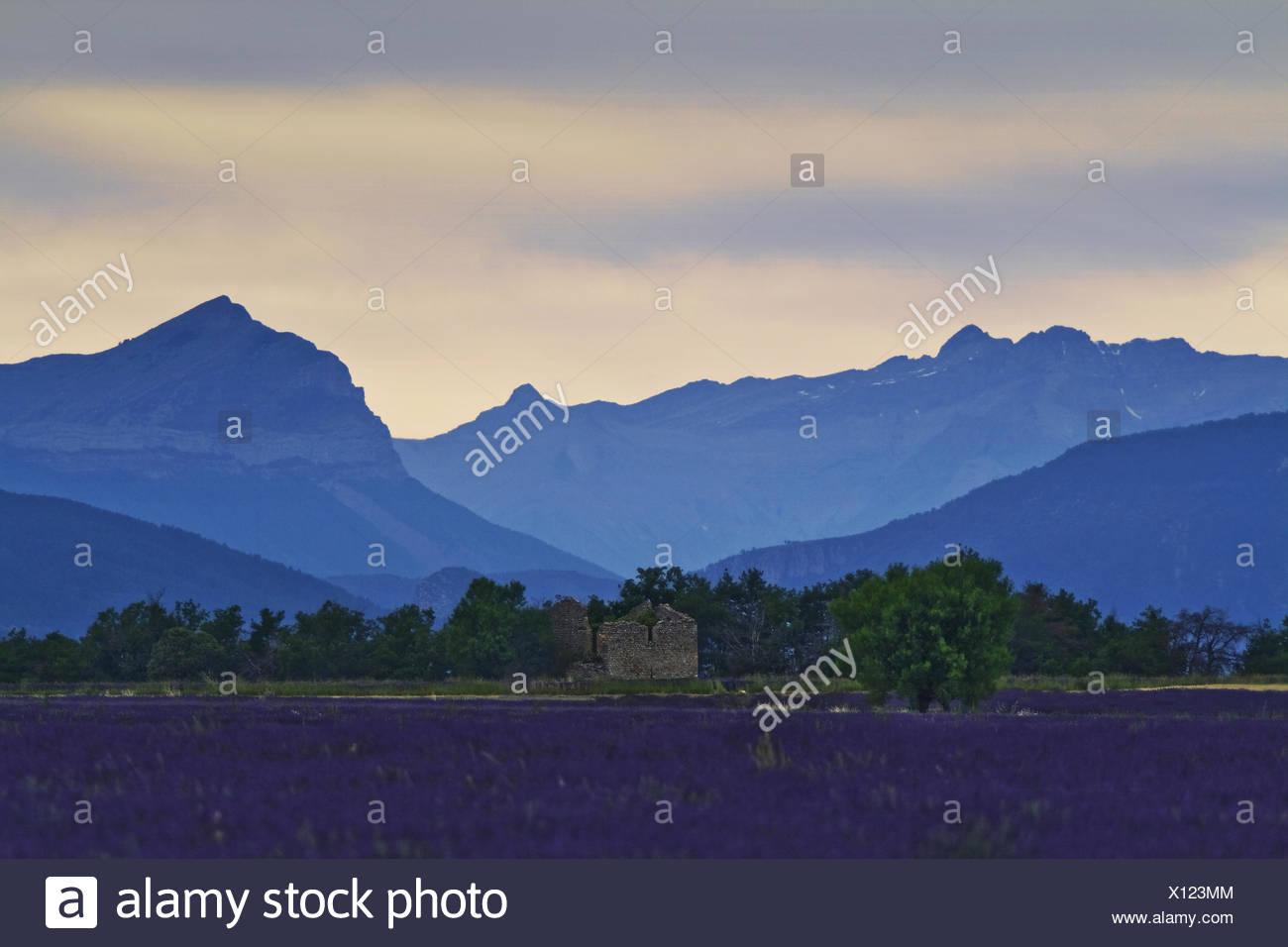 Montagne de Lure, Provenza, Francia Immagini Stock