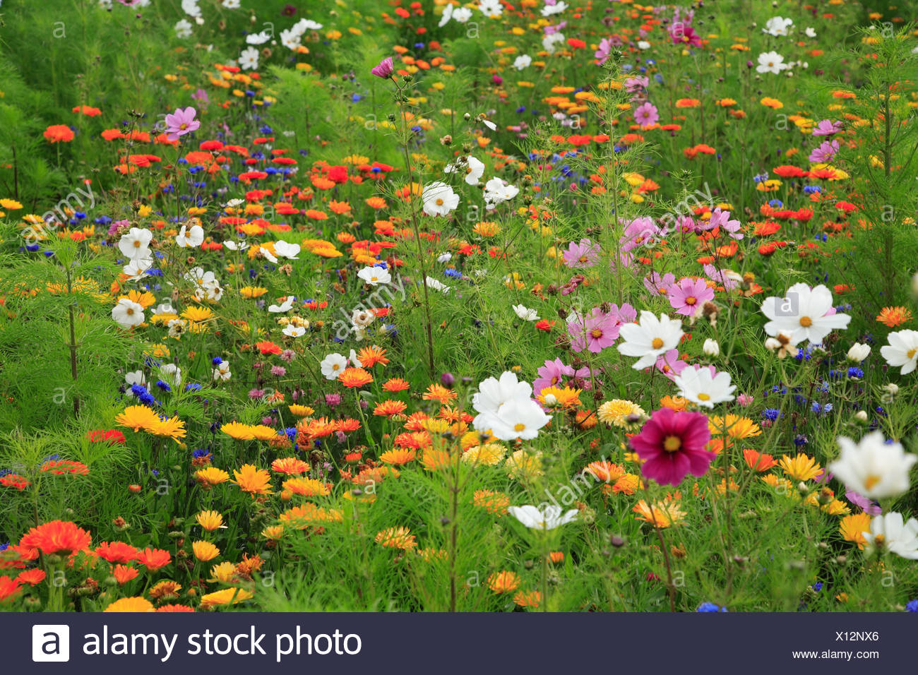 Piante Che Fioriscono Tutta Estate prati fioriti di fiori di prato prato estate-prato fiori