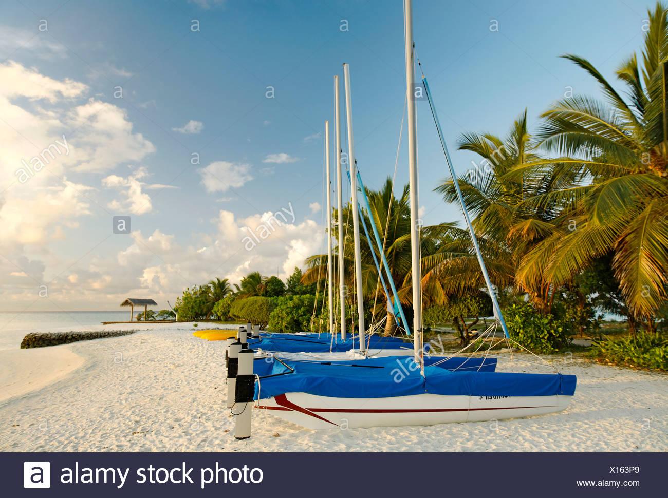 Hobby Auto, catamarani, le barche a vela, fianco a fianco, sulla spiaggia, palme, Maldive isola, South Male Atoll, Maldive, Achipela Immagini Stock