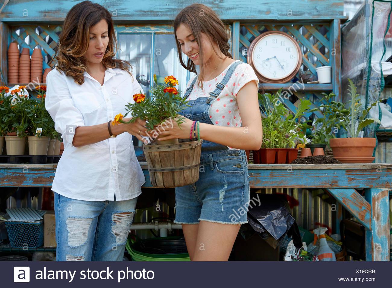 Latina madre e figlia adolescente piantare fiori Immagini Stock