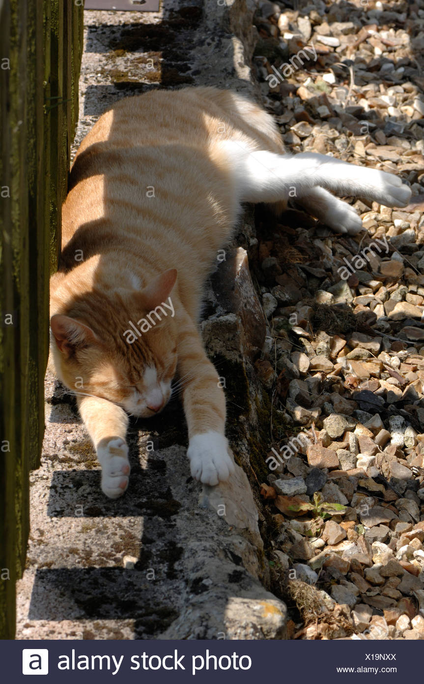 Recinzione Giardino Per Gatti.Un Ginger Gatto Addormentato Sotto Una Recinzione Da Giardino In