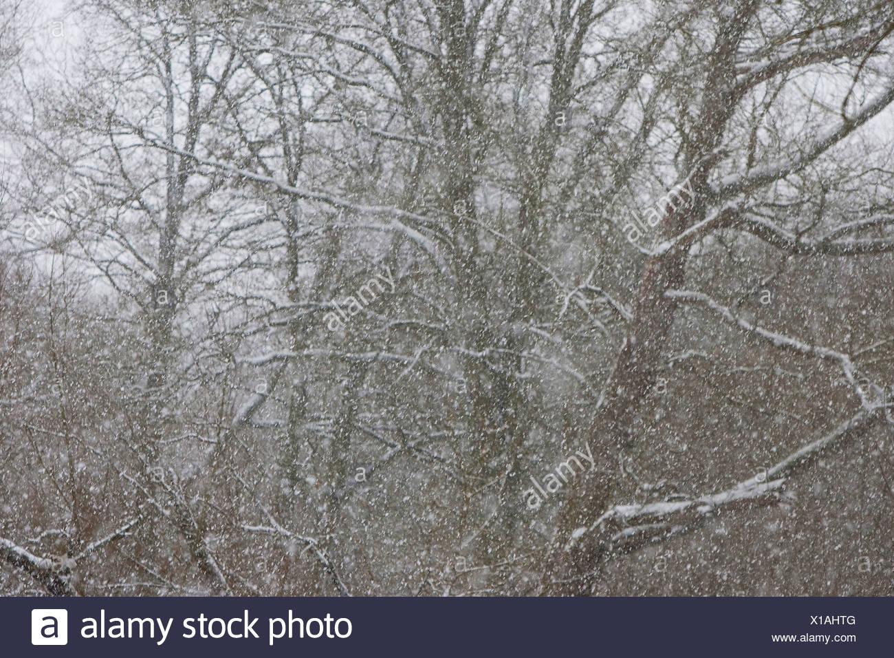 Nevicate in inverno, Germania Immagini Stock
